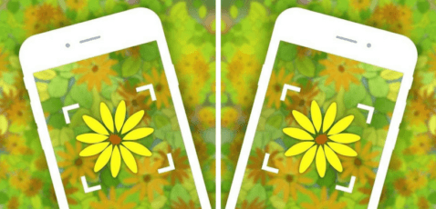 Aplicaciones identificar plantas
