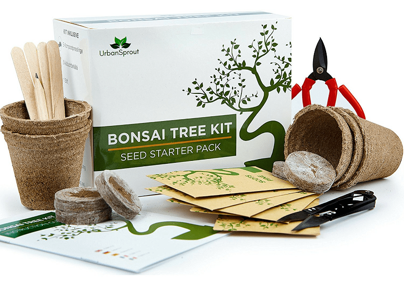 Kit bonsai