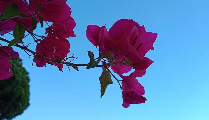 Wiko View 3 Pro foto flor