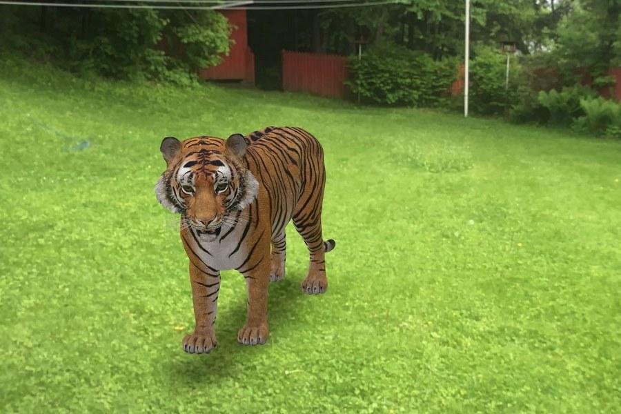 Tigre Google