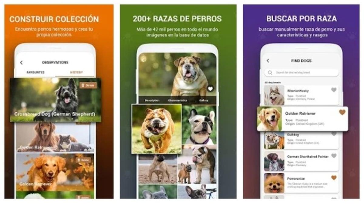 Escanear perros