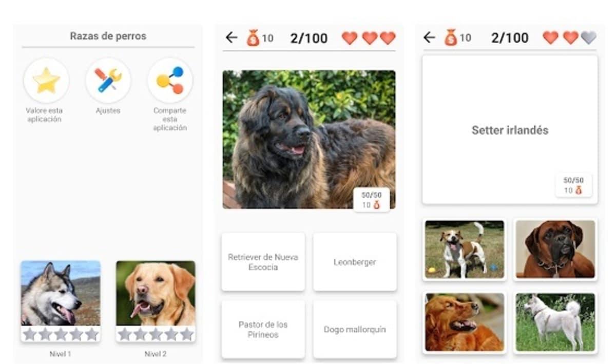 Quiz perros