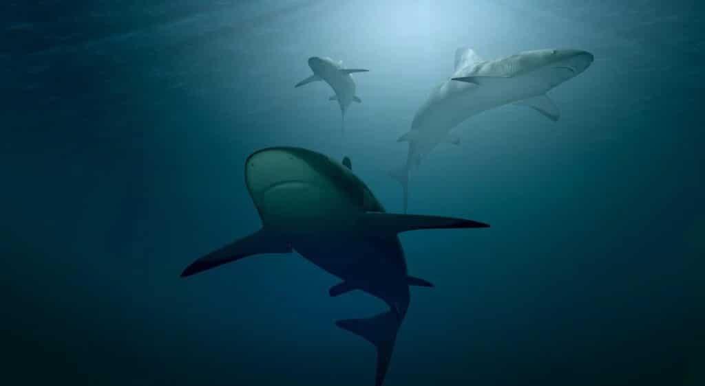 Los 5 mejores juegos de tiburones para Android