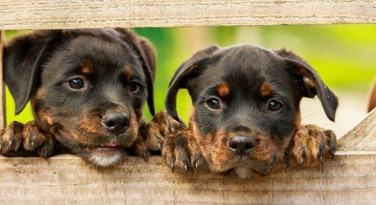Los 5 mejores juegos de perros para Android